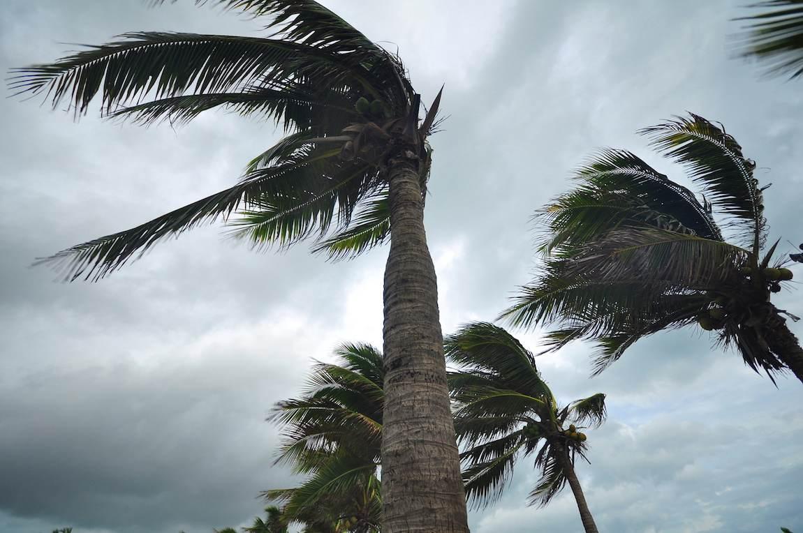 orage temps nuageux palmier