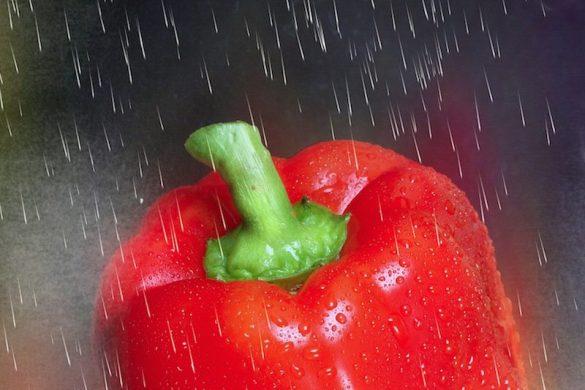 légume poivron pluie