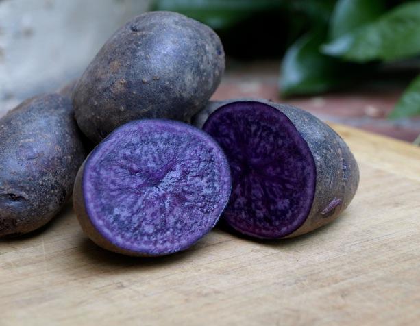 pomme de terre purple majesty