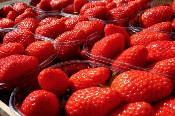 fraise gariguette en barquette