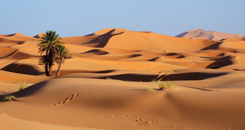Image désert comme le marché de Rungis cette semaine